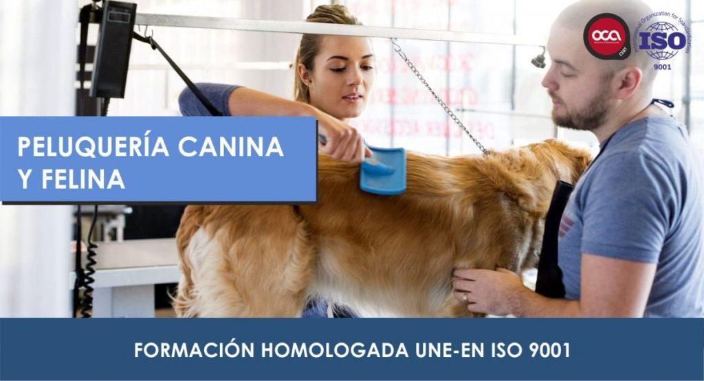 curso de peluqueria canina y felina eesea